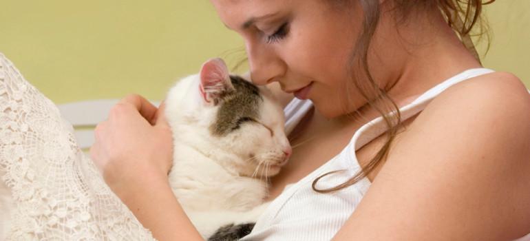 «Кошкотерапия», или секреты домашних любимцев