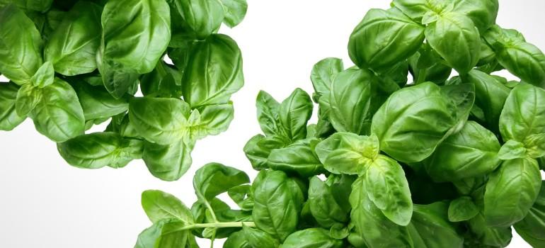 Какие травы, чаи и настои помогут снять похмельный синдром?