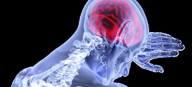 Потребление алкоголя приводит к усадке мозга