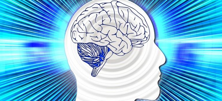 В мозге обнаружен белок, способный помочь в лечении алкогольной зависимости