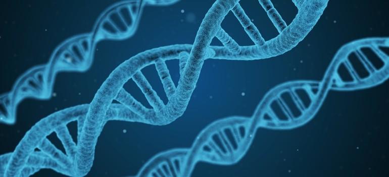 Гены в развитии алкоголизма играют большую роль